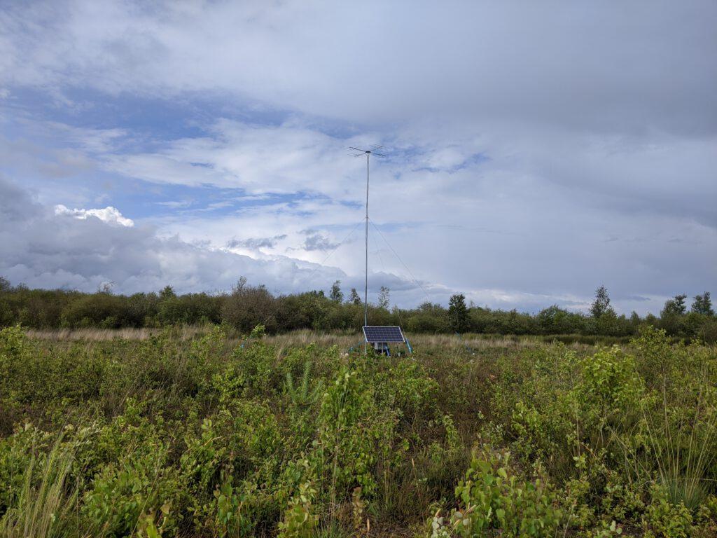 Mast in de Groote Peel volgt gezenderde vleermuizen